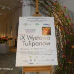 Relacja z wystawy tulipanów i życzenia pięknych Świąt.