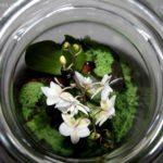 Kwiatek w słoiku – prosty pomysł na prezent