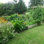 Podniesione rabaty warzywne – update z sezonu